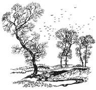 bw_trees1