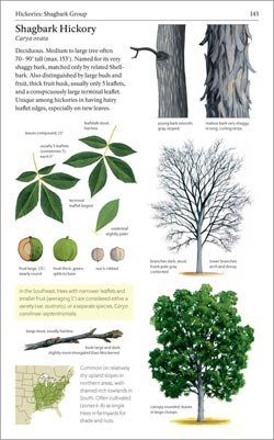 Sample page from The Sibley Guide to Trees