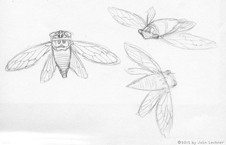 insect drawings by John Lechner