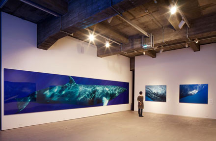 Photographs by Bryant Austin on display at the Museum of Monterey