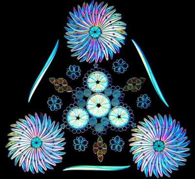 Diatom by Klaus Kemp