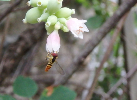 Tiny bee on flower