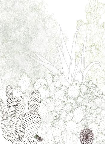 Cribbed Cacti 2